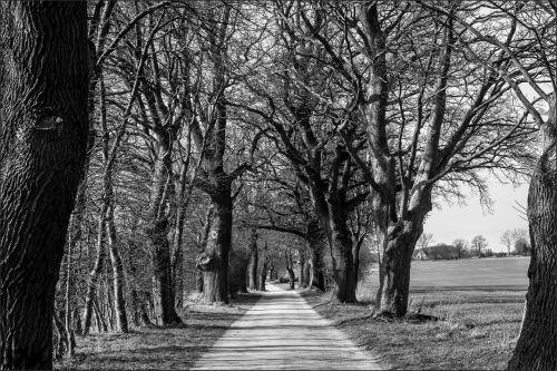 avenue mecklenburg western pomerania branches