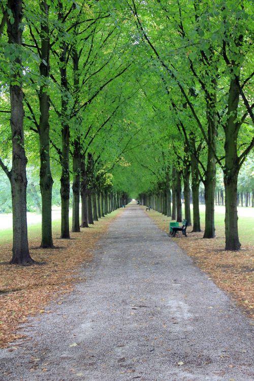 avenue trees park