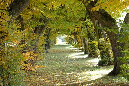 avenue castle avenue laupheim
