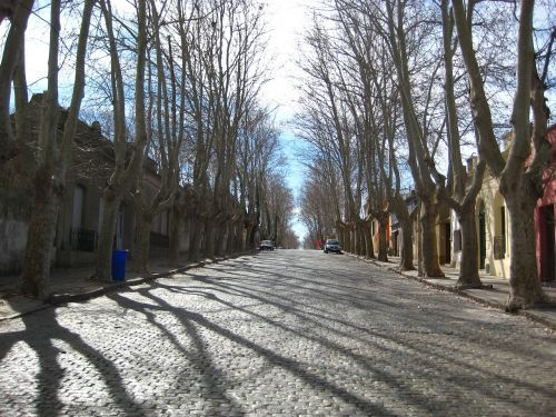 avenue cobbles trees