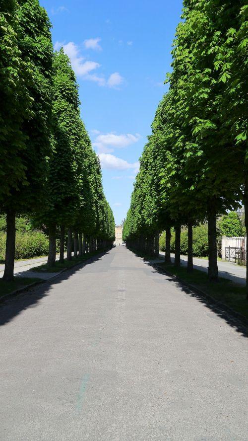 avenue trees tree lined avenue