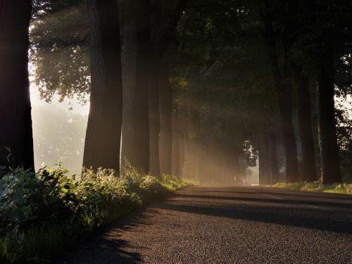 avenue trees road