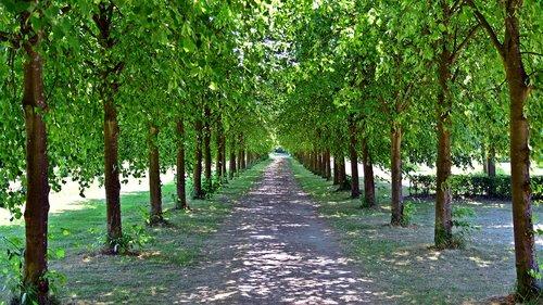 avenue  trees  away