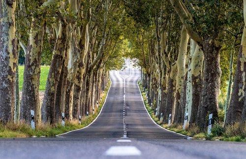 avenue  trees  nature