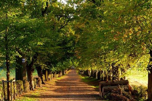 avenue  autumn  forest