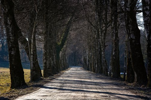 avenue  tree lined avenue  trees