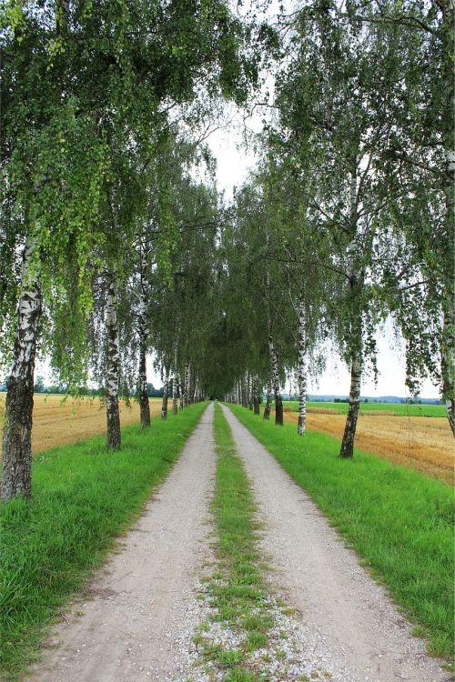 avenue birch avenue away