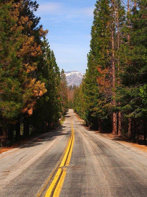 avenue  road  nature