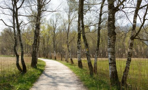 avenue birch away