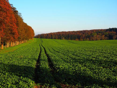 avenue field arable