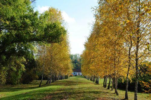 avenue autumn november