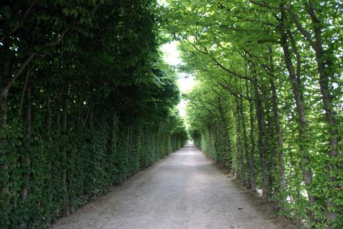 avenue road trees