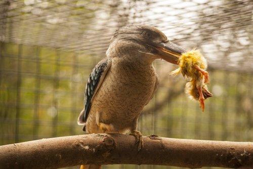 aves  nature  animalia