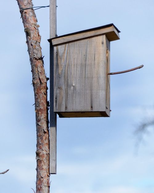 aviary nesting place bird feeder