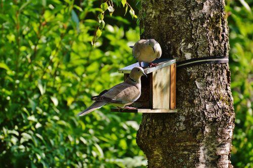 aviary pigeons birds