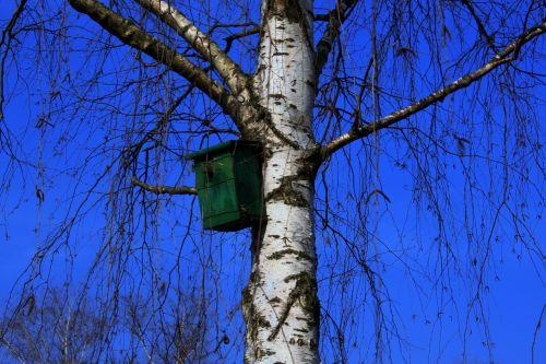 aviary tree birch