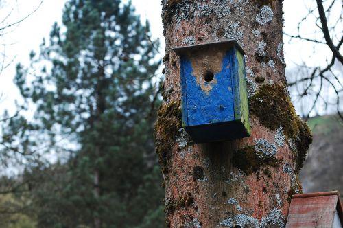 aviary tree wood