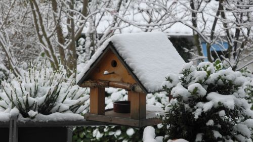 aviary snow bird