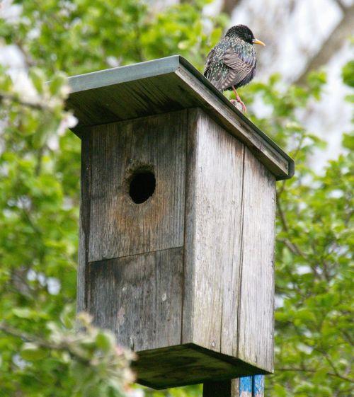 aviary animal bird