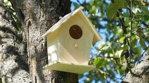 aviary bird's nest nesting place