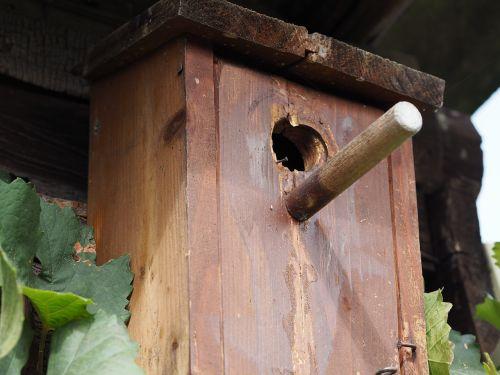 aviary nesting box bird feeder
