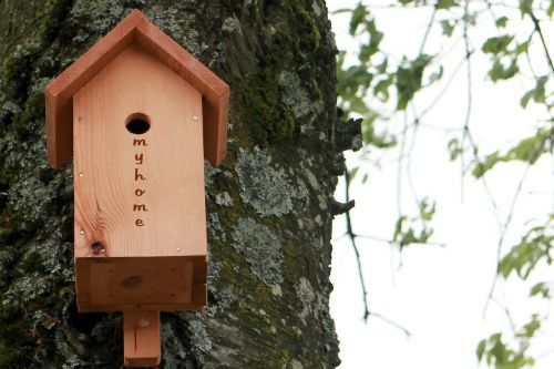 aviary bird feeder nesting box