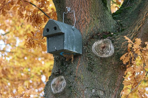 aviary  nesting box  nature conservation