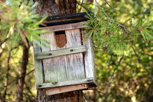 aviary  incubator  nesting box