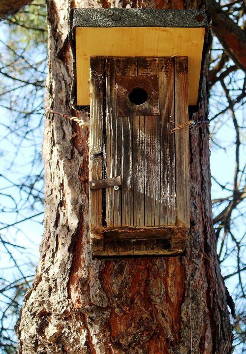 aviary nesting box einflugloch