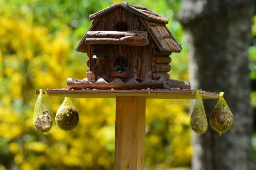 aviary food bird