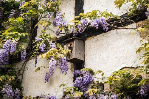 aviary truss wisteria