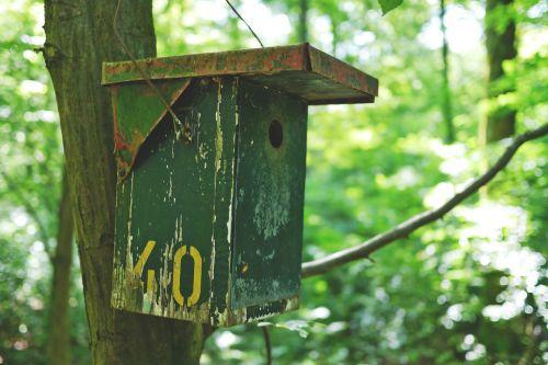aviary bird bird feeder