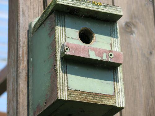 aviary bird nature