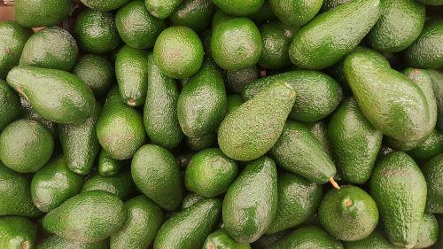 avocado fruit vegetarian