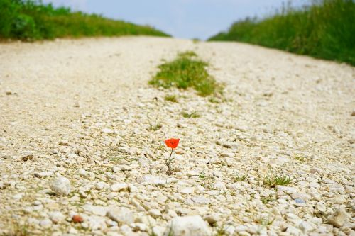 away road poppy