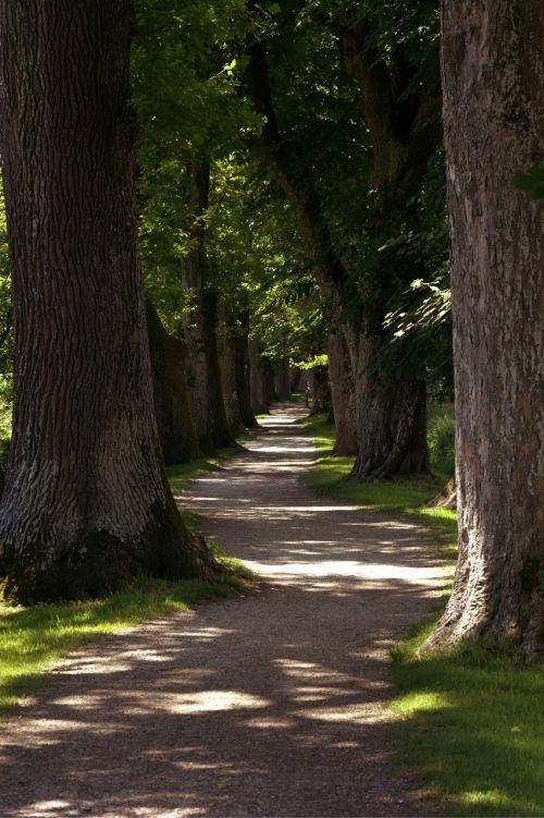 away tree lined avenue avenue