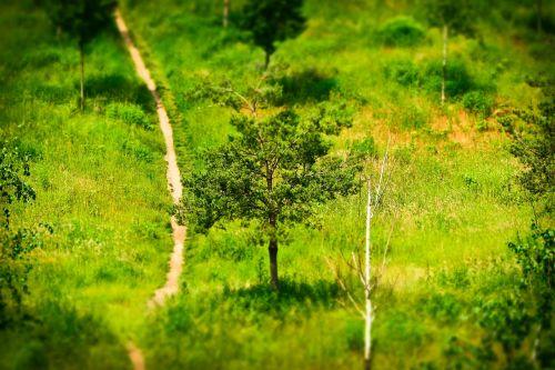 away trees landscape