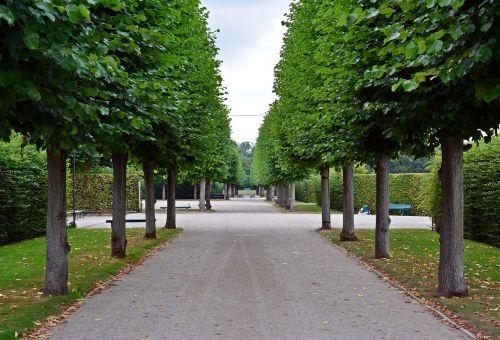 away park trees