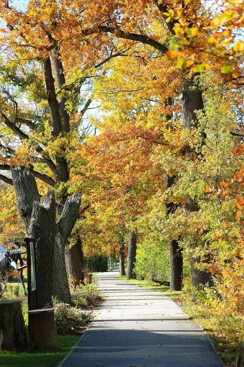 away autumn fall foliage