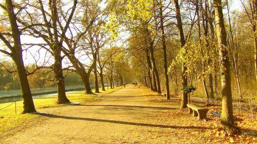 away avenue trees