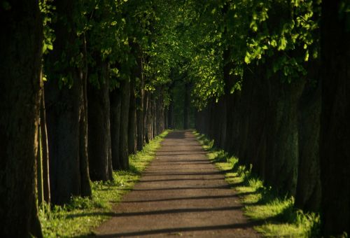 away avenue chestnut