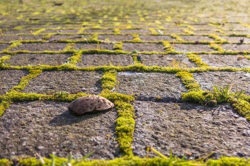 away moss green