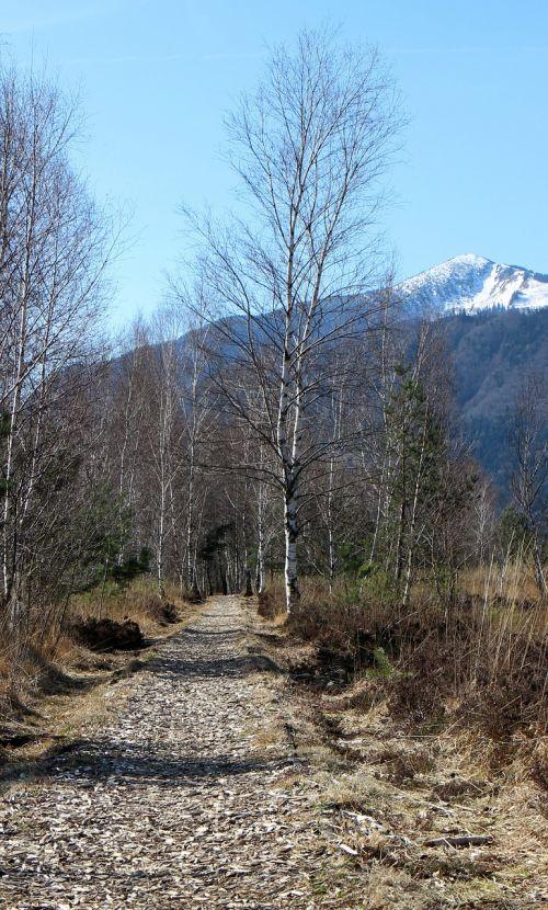 away path birch