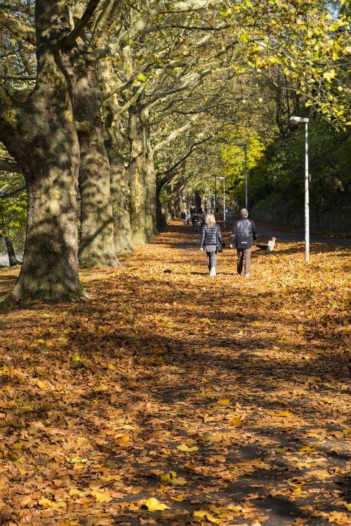 toli,šaligatvis,alėja,ruduo,lapai,medžiai,gamta,eiti,žmogus,taikinys,toli,platus,begalinis