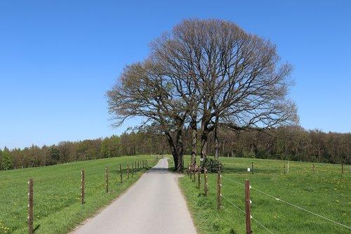 away  trees  meadow