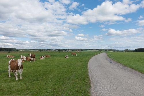 away cow pasture
