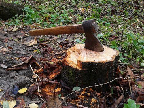 axe stump tree