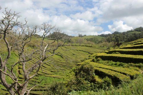 azores landscape trail