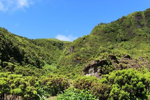 azores  green  overgrown