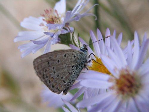 azure  butterfly  blue